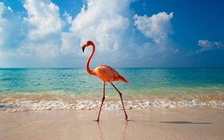 Что посмотреть в Доминикане — фото и описание достопримечательностей
